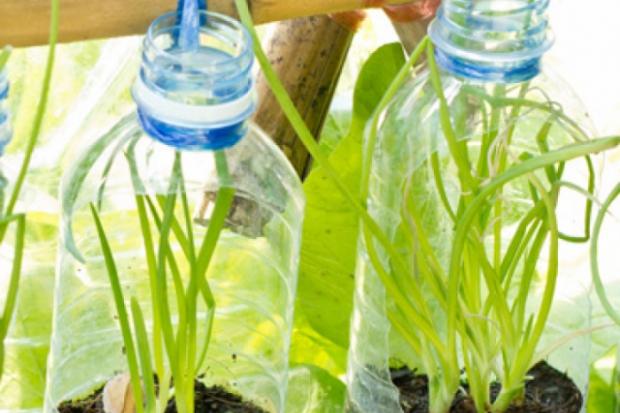 Отглеждане на спанак и други зеленчуци в контейнери