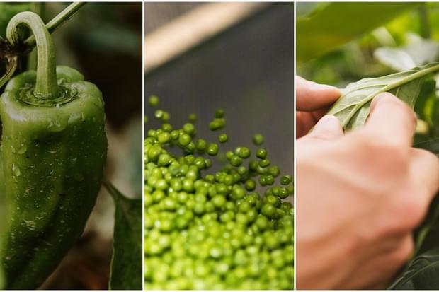 С две ръце ЗА органичните зеленчуци без остатъци от пестициди!