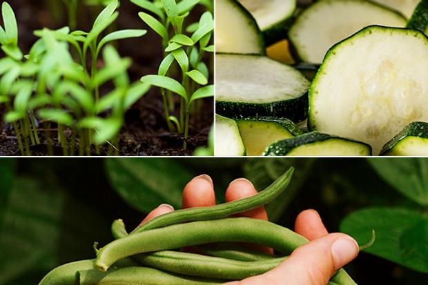 Η βιωσιμότητα είναι κάτι που καλλιεργείς!