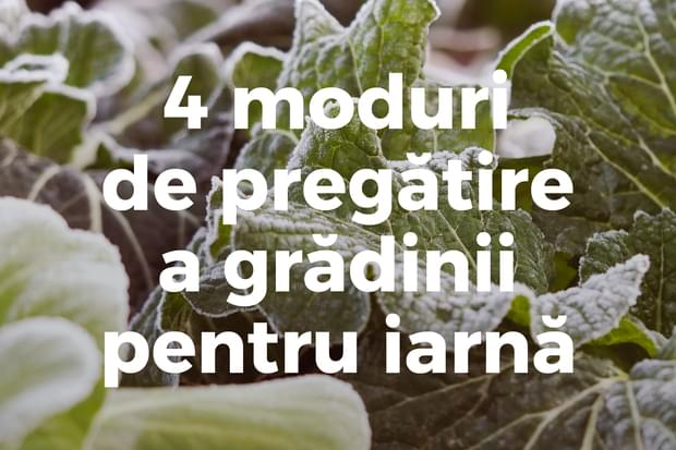 4 moduri de pregătire a grădinii pentru iarnă