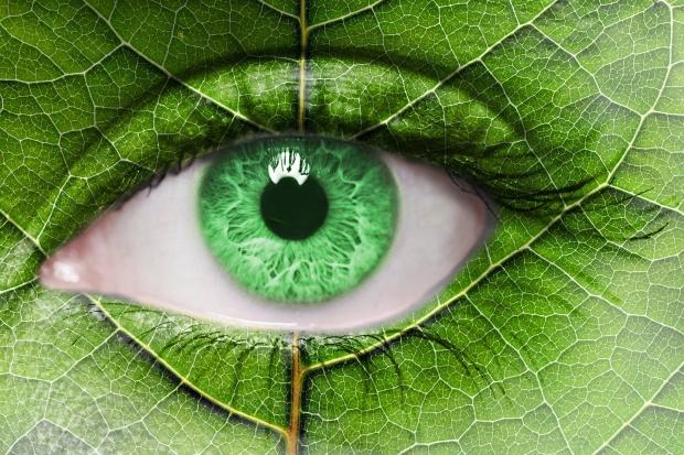 Protecţia văzului – filtre naturale în legume