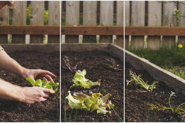 Rezoluții pentru anul ce vine: o viață mai sănătoasă, care poate începe cu grădinăritul