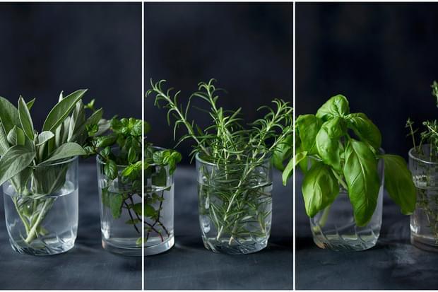 Cum să îți creezi propria cultură de plante aromatice