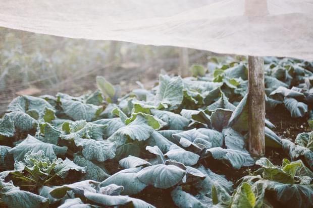 Protejează-ți grădina pe timpul iernii
