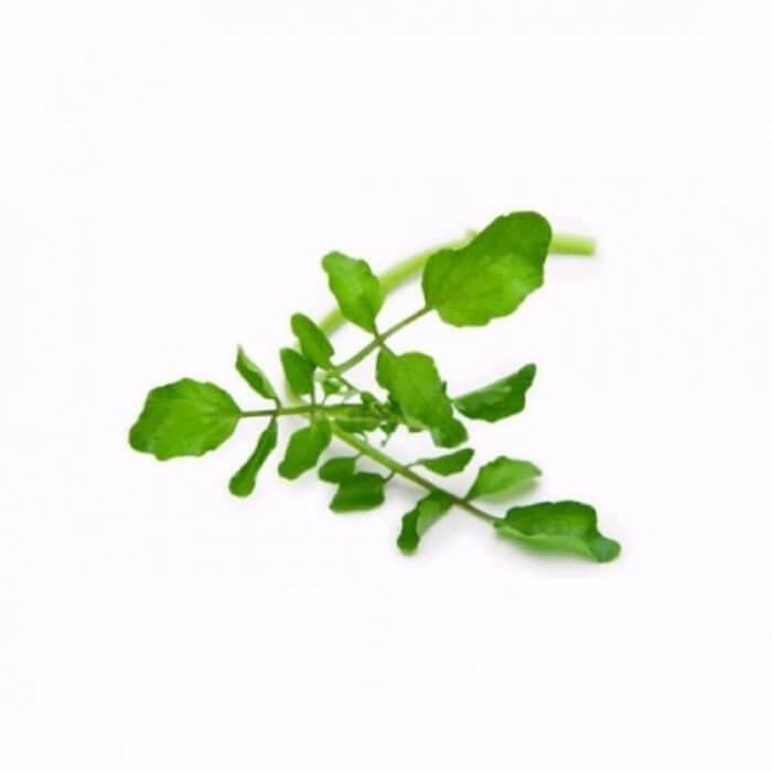 Крес-салат городній